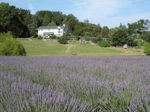 farmhouse-lavender